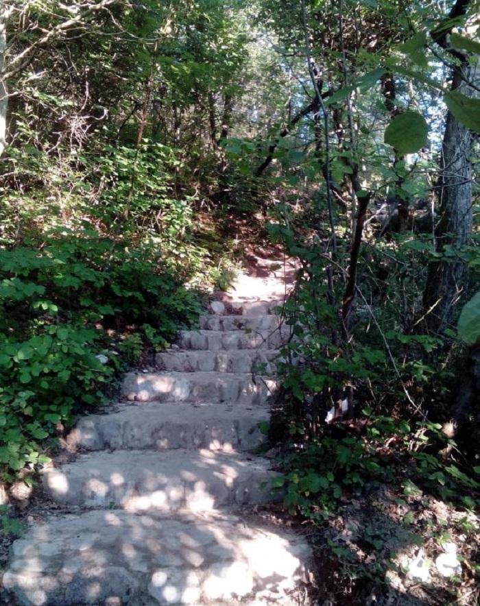 Кемпинг в сосновом лесу на берегу черного моря «Бриз» — Архипо-Осиповка